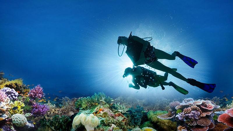 海に潜ると、地上よりも美しい世界が目の前に広がります。